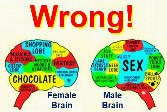 Male and female brain
