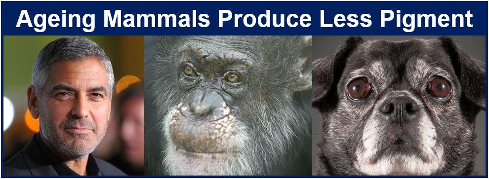 Mammals go grey