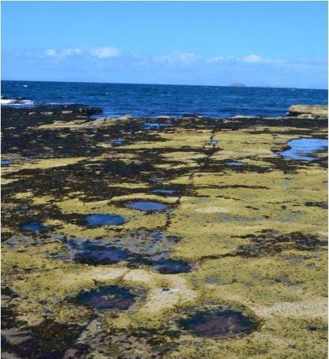 Sauropod footprints and handprints in Isle of Skye