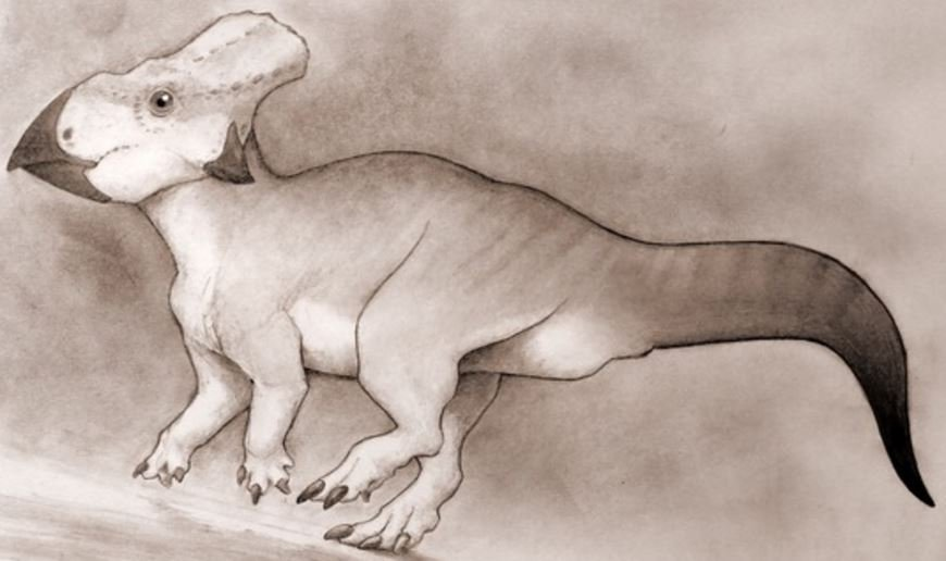Small horned dinosaur