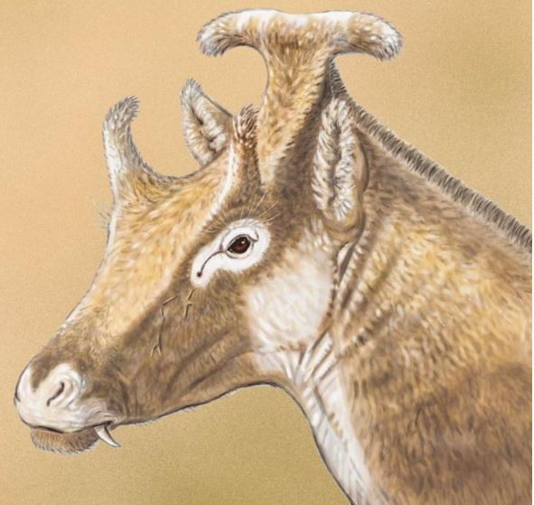 Three horned ruminant with fangs