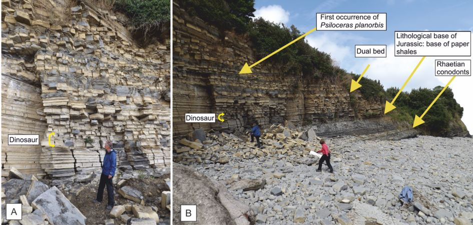 Beach and cliff where dinosaur fossils were found
