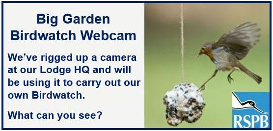 Big Garden Birdwatch webcam come and have a look