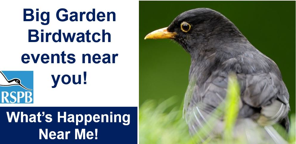 Big garden birdwatch events new you