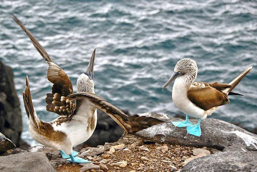 Bird courtship rituals
