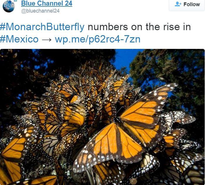 Blue Channel Monarch Butterfly