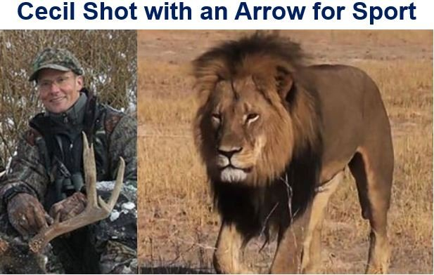 Cecil shot with an arrow for sport