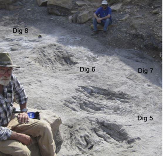 Evidence of dinosaur scrapes