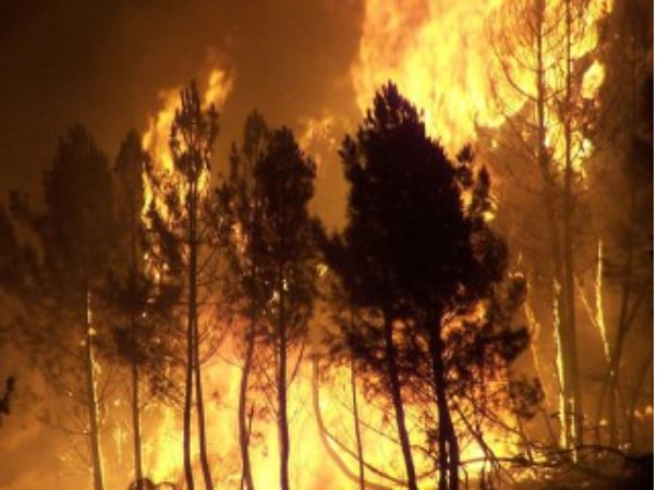 Forest fires increase with hottest summers