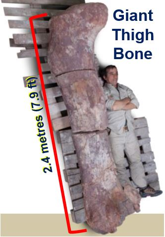 Giant thigh bone unearthed in Argentina