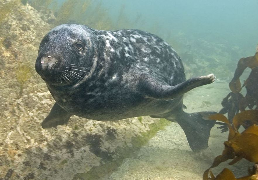 Marine Conservation Zones help protect our wildlife