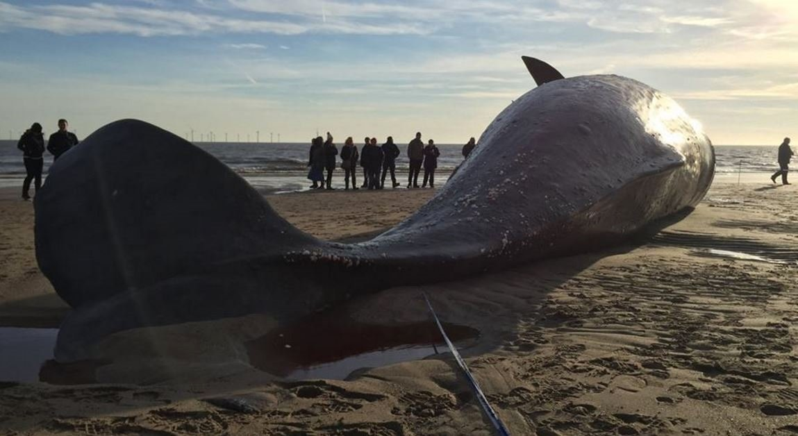 Members of public told to keep away from dead whales