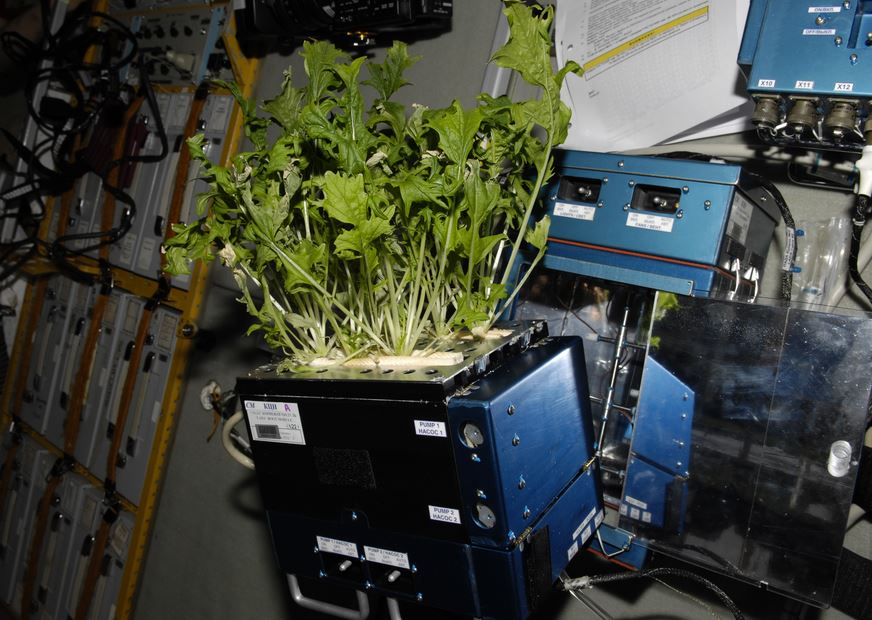NASA has been space gardening for a long time