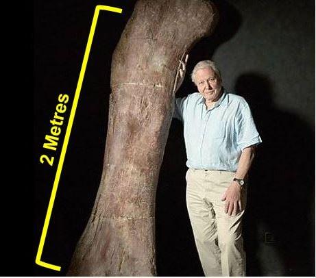 Sir David Attenborough with the giant thigh bone