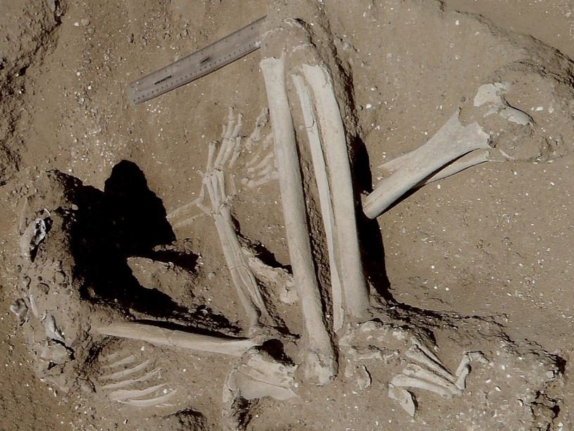 Skeleton of a woman who was probably tied up
