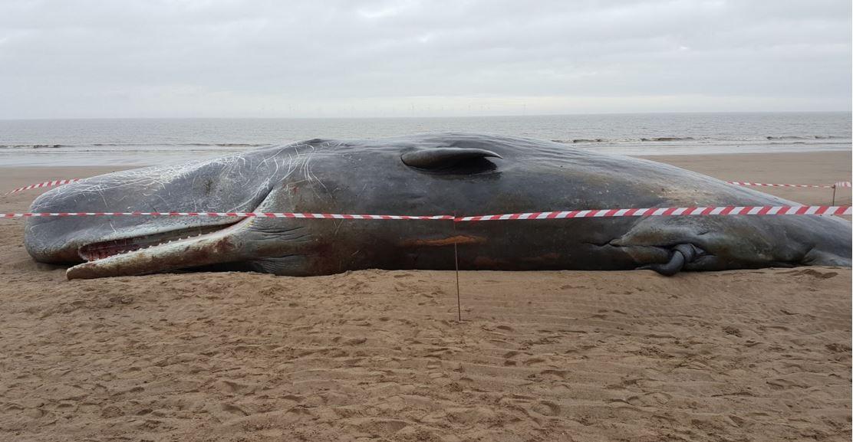 Third dead whale found on beach