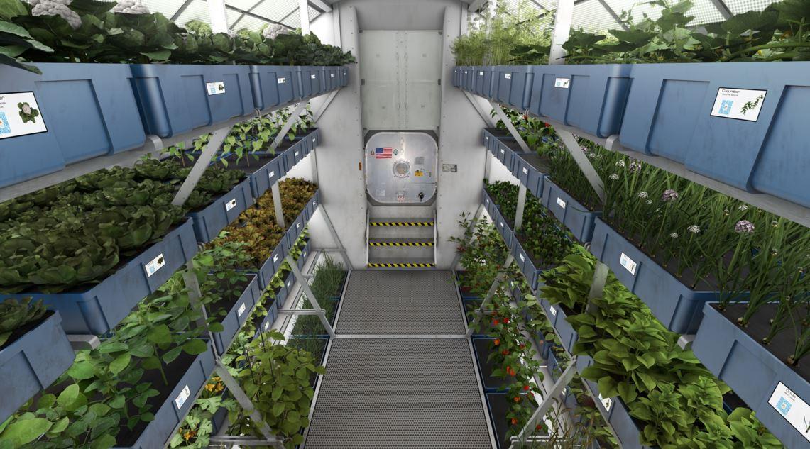 Veggie garden at ISS in space