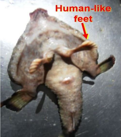 Alien mutant fish with human like feet