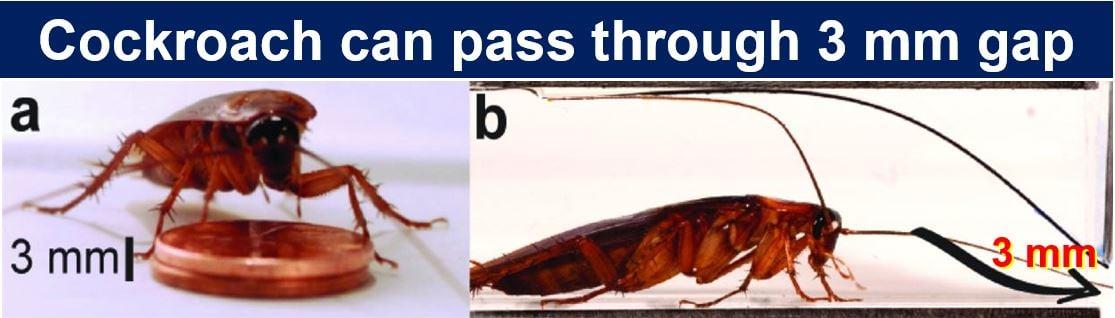 Cockroach can pass through 3 mm gap