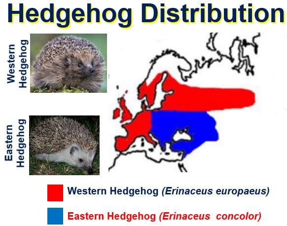 Hedgehog Distribution