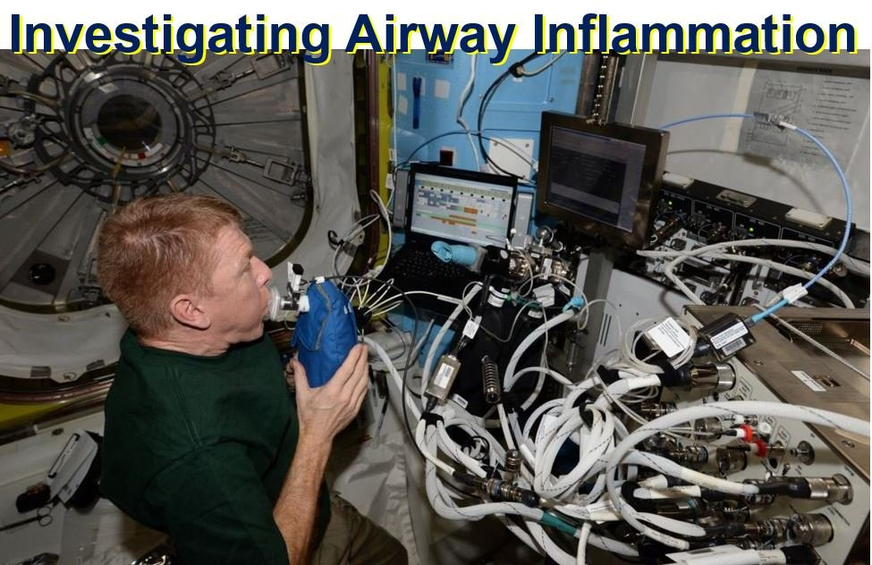 Investigating Airway Inflammation