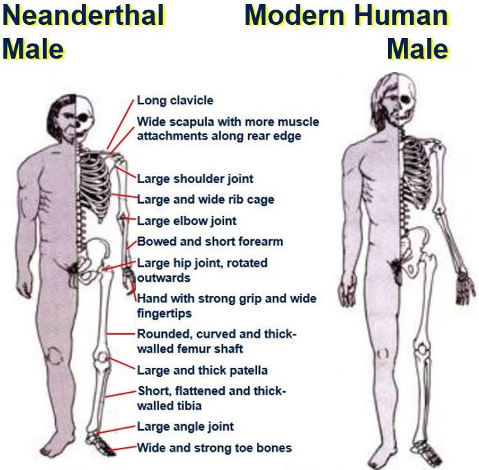 Difference Between Modern And Contemporary: Neanderthals And Modern Humans Mated 100000 Years Ago