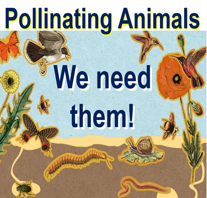 Pollinating animals we need them
