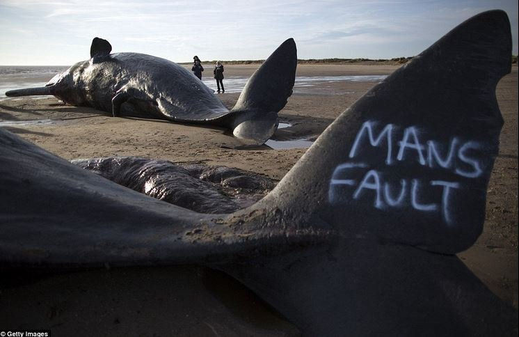 Sperm whale deaths not caused by us this time
