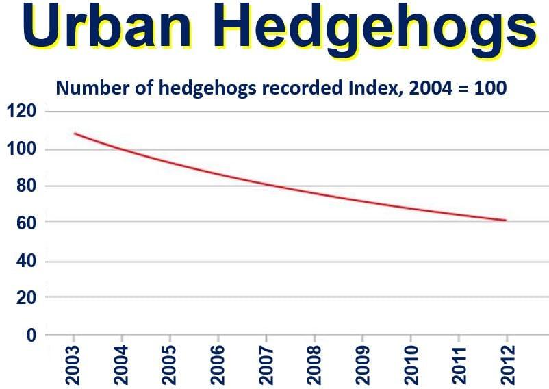 Urban Hedgehogs