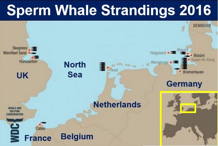 Whale Strandings so far this year 2016