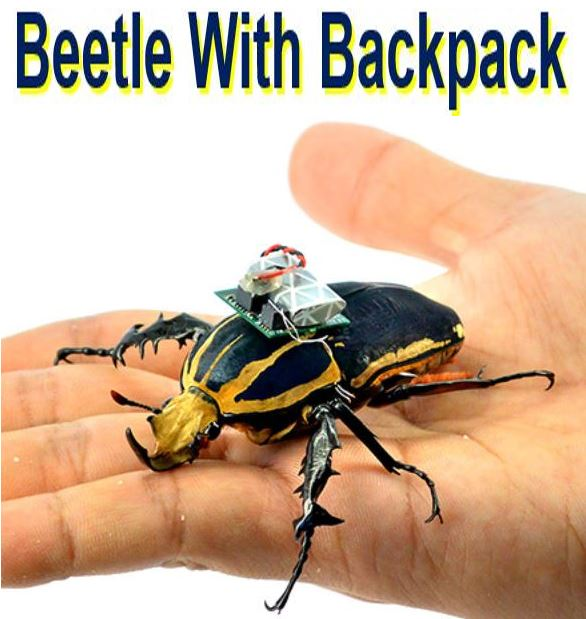 Beetle with Backpack