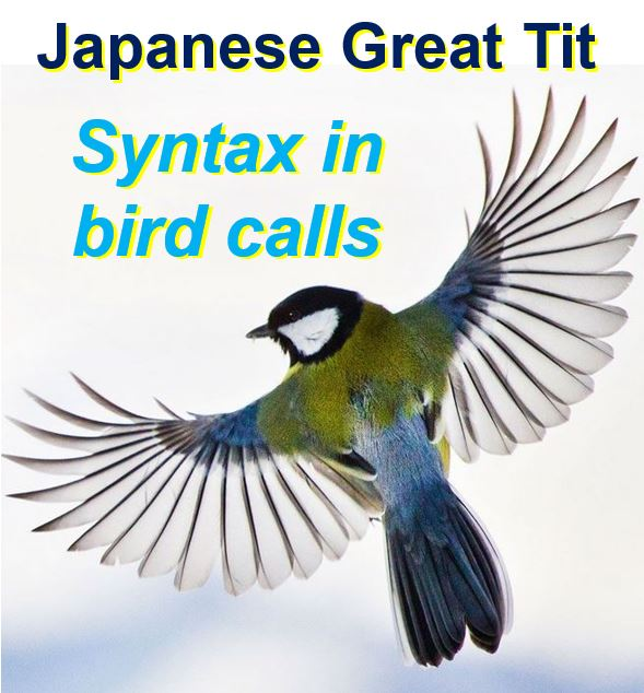 Birds have evolved syntax
