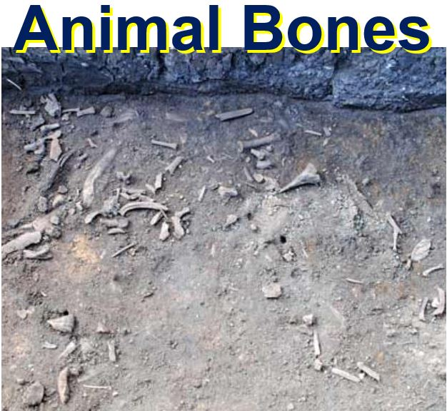 Butchered animal bones