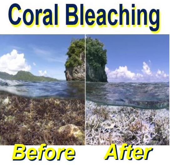 Coral Bleaching before and after