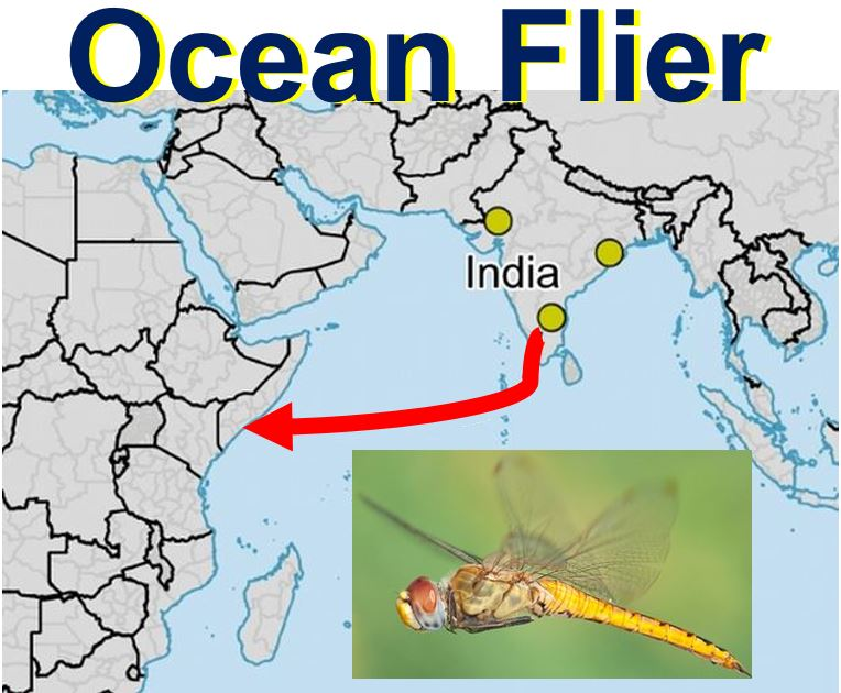 Dragonfly ocean flier