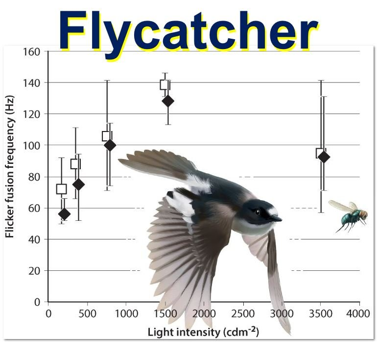 Flycatcher experiment