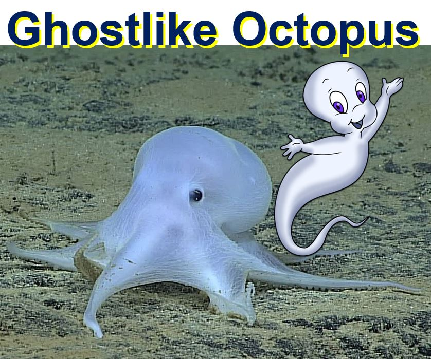Ghostlike Octopus Casper