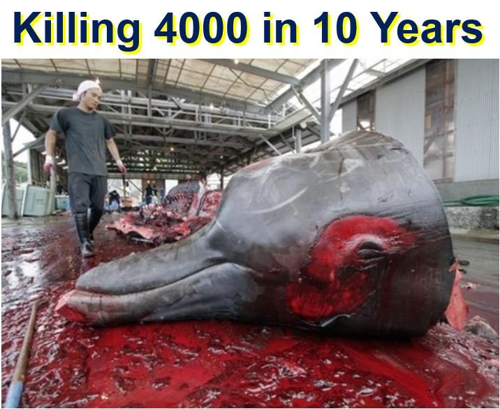 Killing 4000 whales in 10 years for science