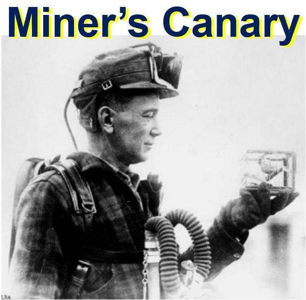 Miners Canary