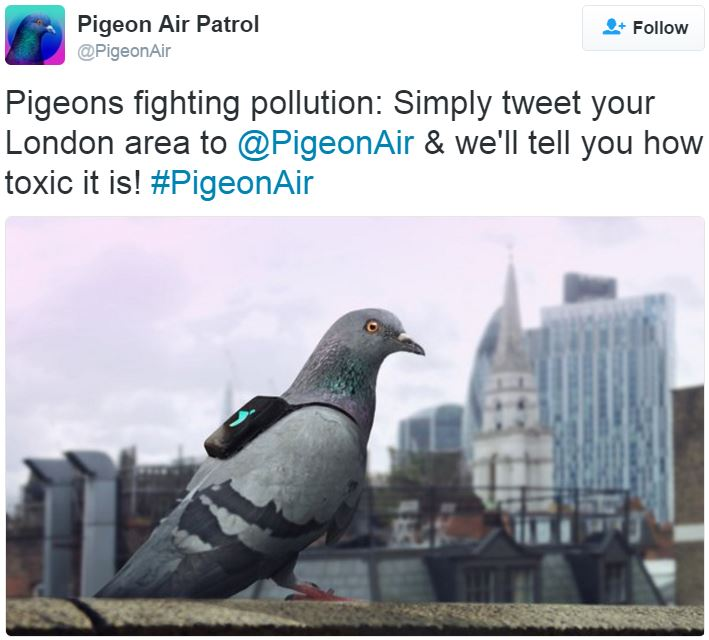Pigeon Air Patrol pigeons monitoring pollution in London