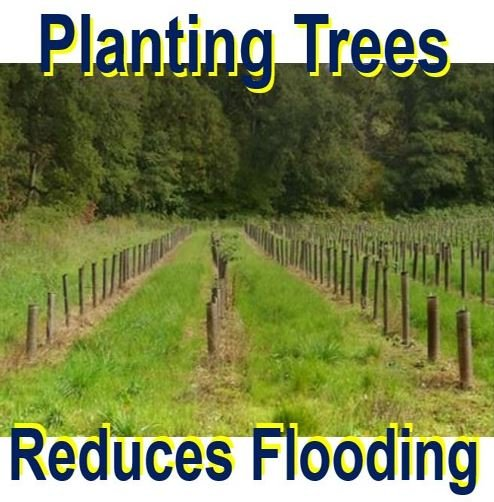 Planting trees reduces flooding
