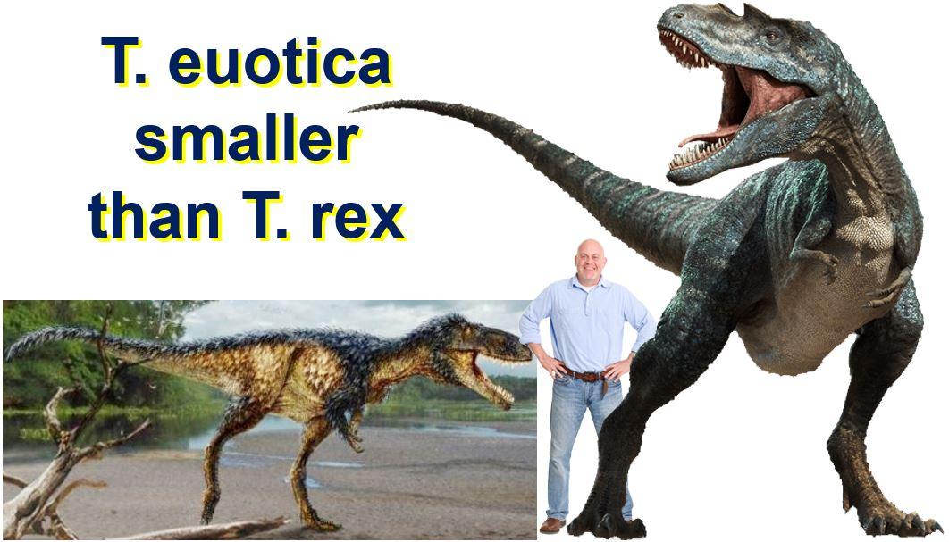 T euotica smaller than T rex