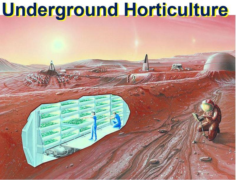 Uderground Horticulture