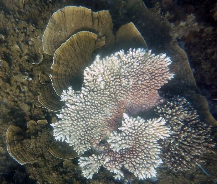 Bleached and healthy corals
