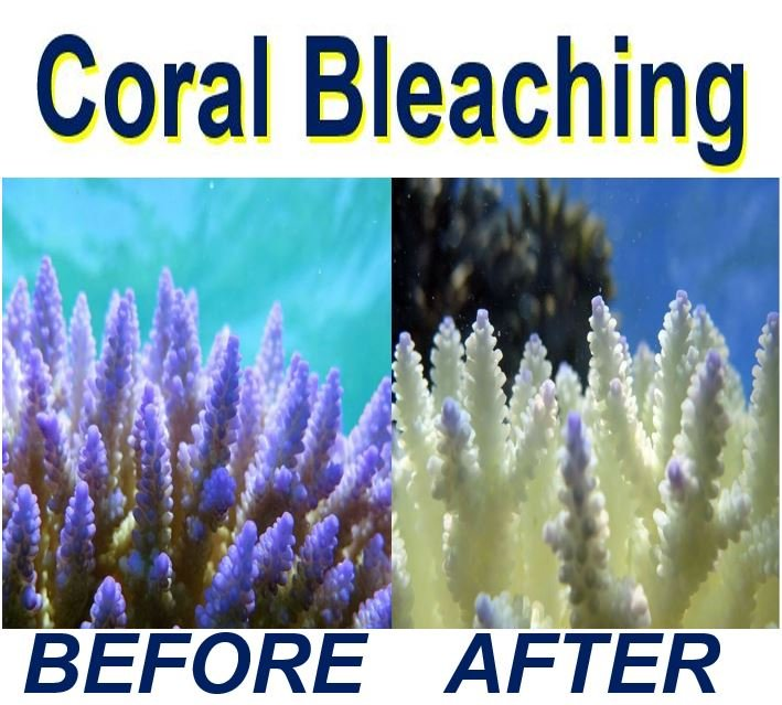 Coral bleaching before and afterwards