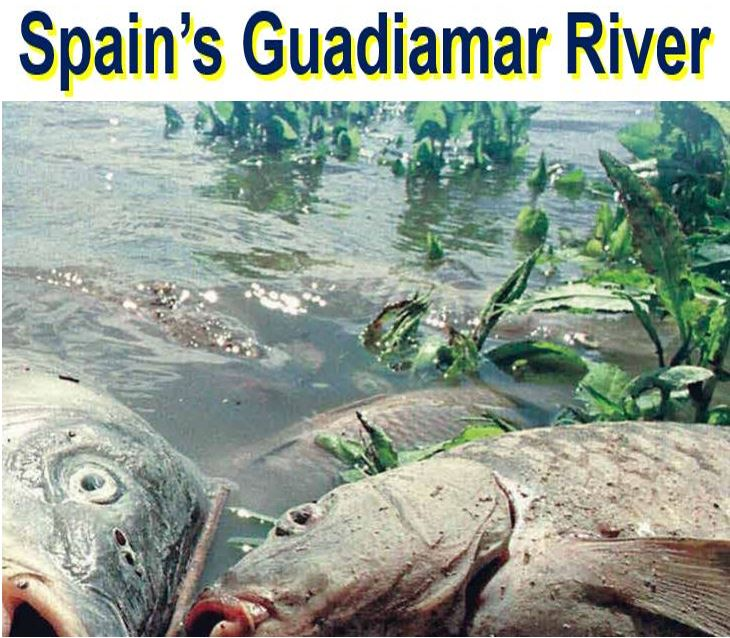 Guadiamar River in Spain