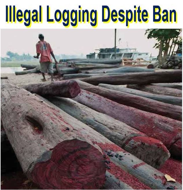 Illegal logging despite ban in Madagascar