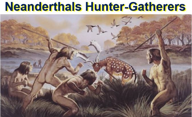 the intrigues of hunting and gathering chipanzees