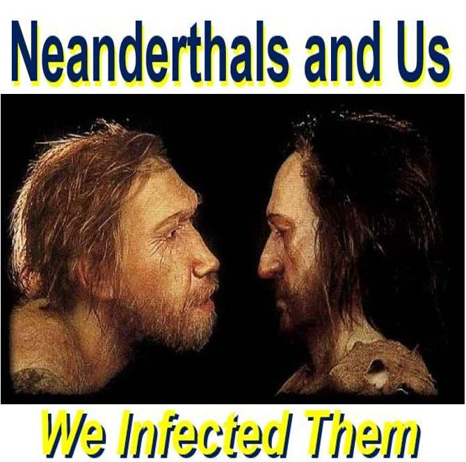 Neanderthals infected by tropical diseases we carried out ...