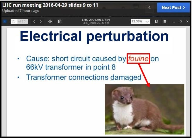 Weasel identified as cause of short circuit at LHC